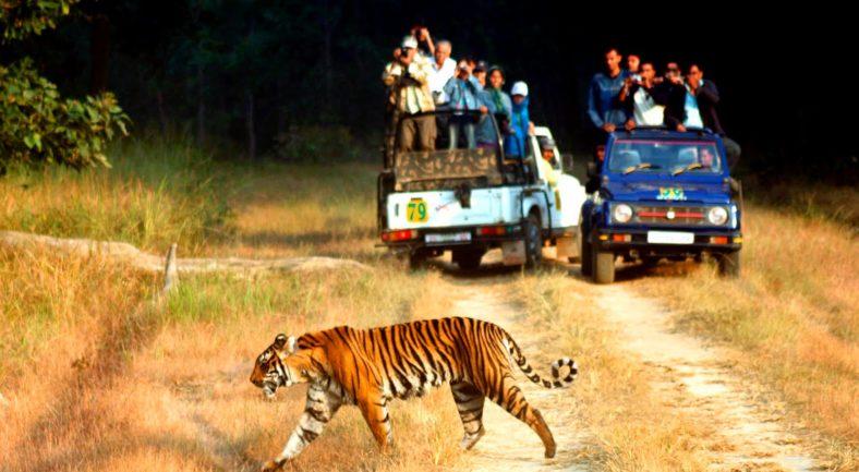 tiger-jim-national-park-tour